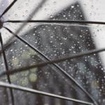 室外でメダカを飼う!餌や雨の日の対策について教えます!