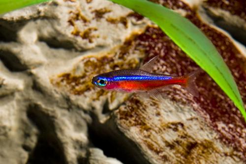 メダカ 熱帯魚 混泳 相性 餌