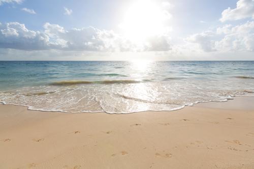 メダカ 海 砂